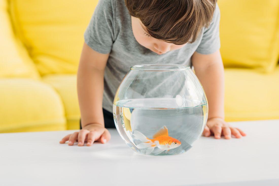 rybki wszklanej kuli