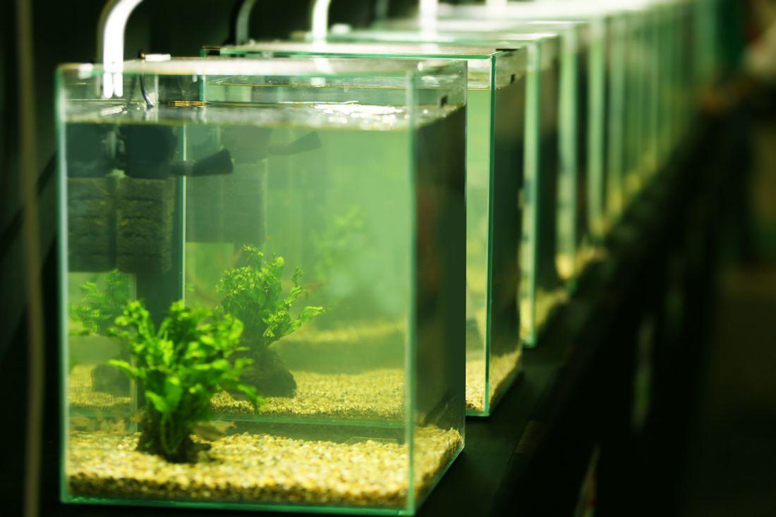 jak transportować rybki