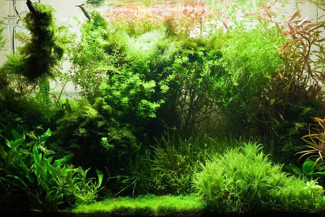 Aranżacja akwarium roślinnego